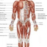 Human-body-amazing-facts