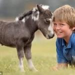 Tiny Horse…Amazing !!!