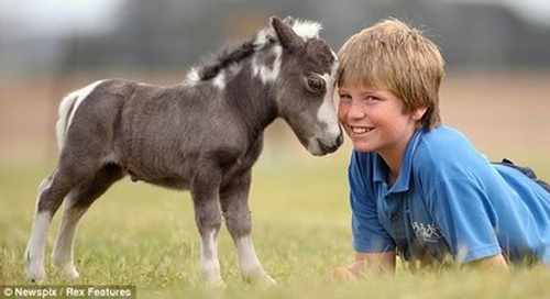 Tiny-Horse-Amazing-Animal-Facts2