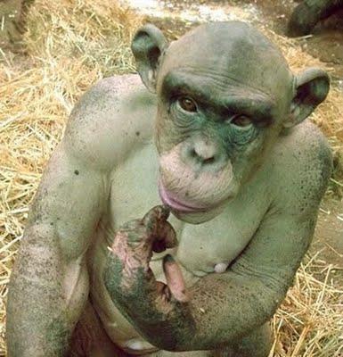 amazing-animal-facts-hairless-money
