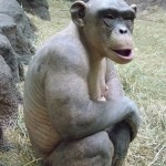 Hairless Chimp…Weird Animals!!