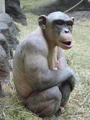 amazing-animal-facts-hairless-money2