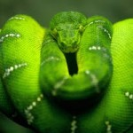 Amazing Pictures of Snakes