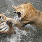 Crazy fights Pictures !!