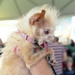 World Contest Of Ugliest Dog 2011