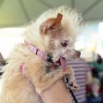 World Contest Of Ugliest Dog 2011